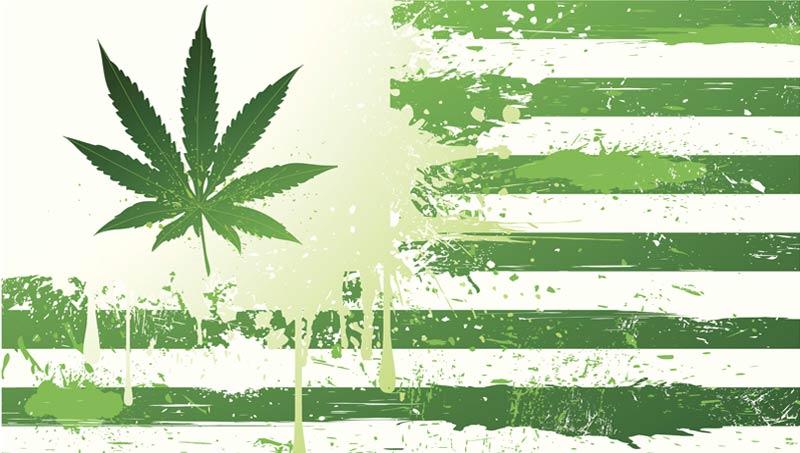 """Conoce los Estados que dieron el """"Sí"""" al Cannabis"""
